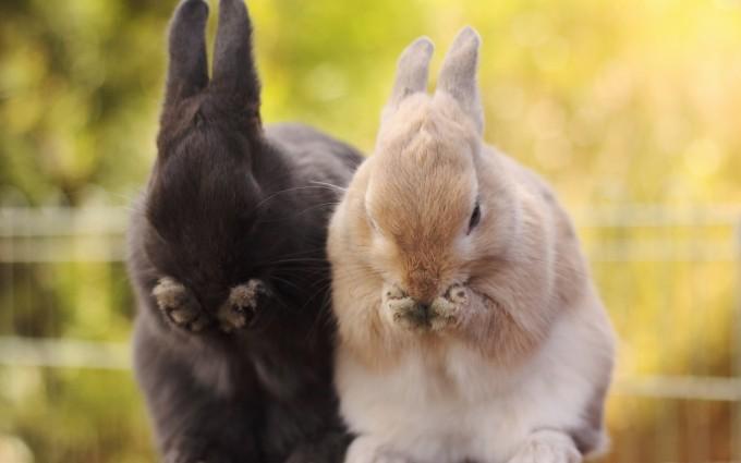 rabbit photos free download