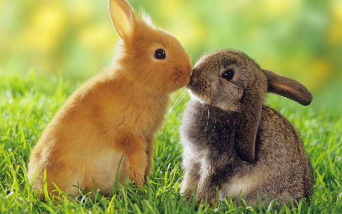 rabbit pictures free download