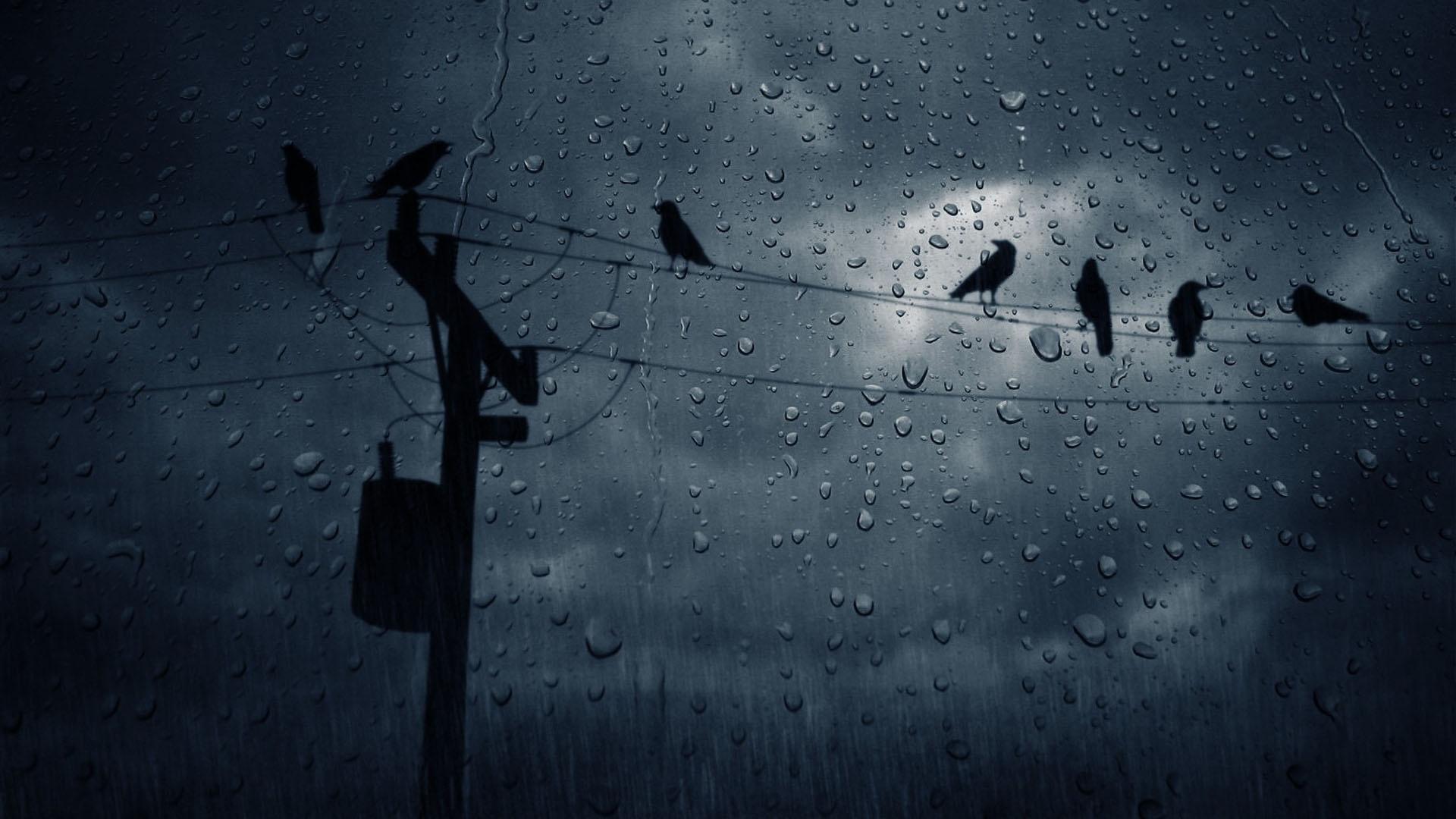 rain fall window wallpaper