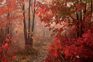 rain forest wallpapers red