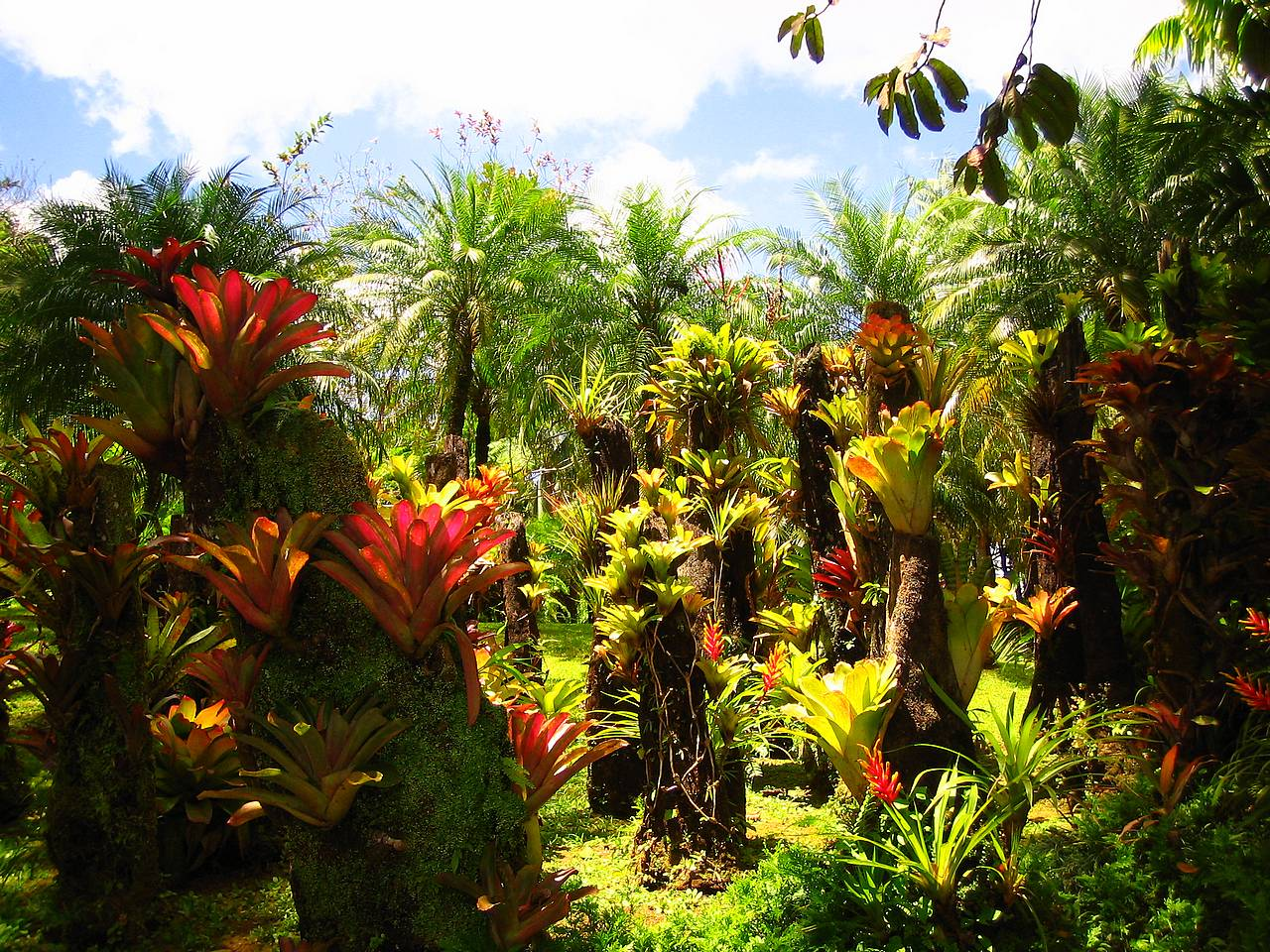 rain forest wallpapers tropical