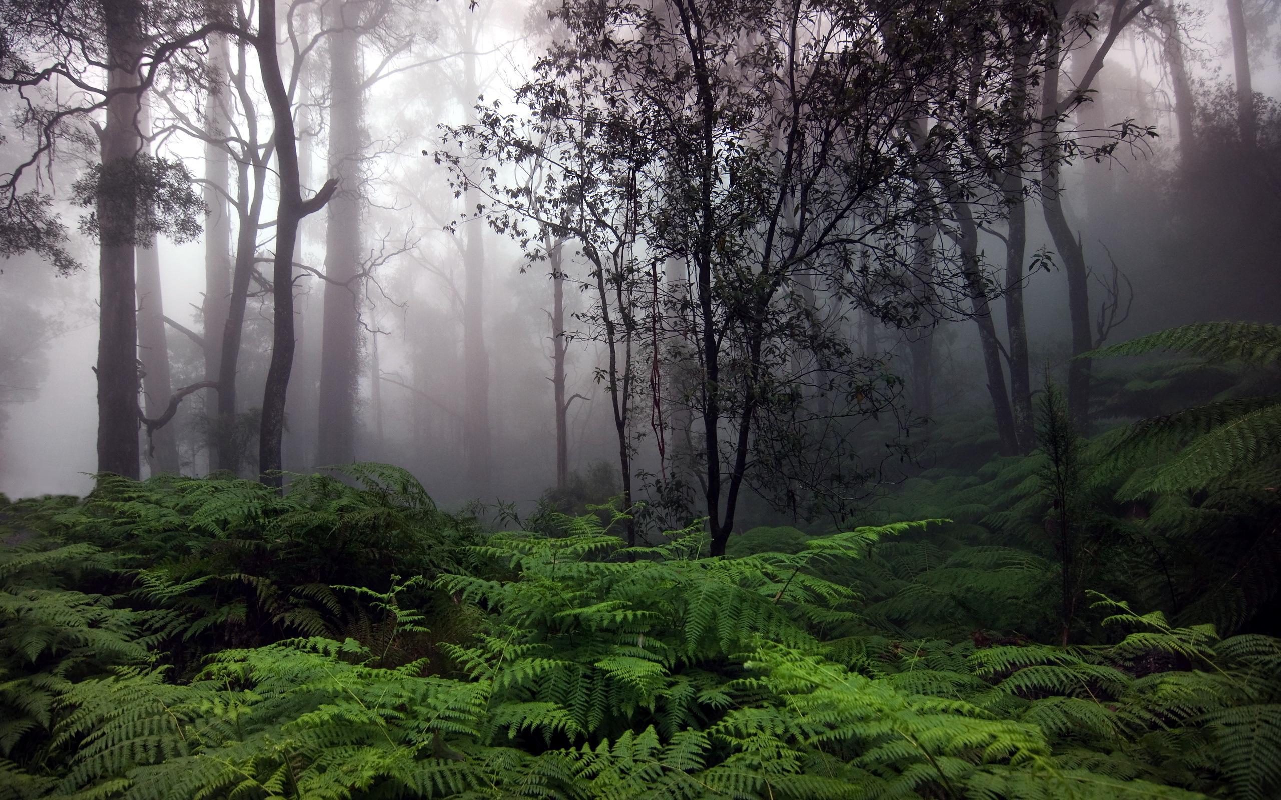 rain forest - HD Desktop Wallpapers | 4k HD