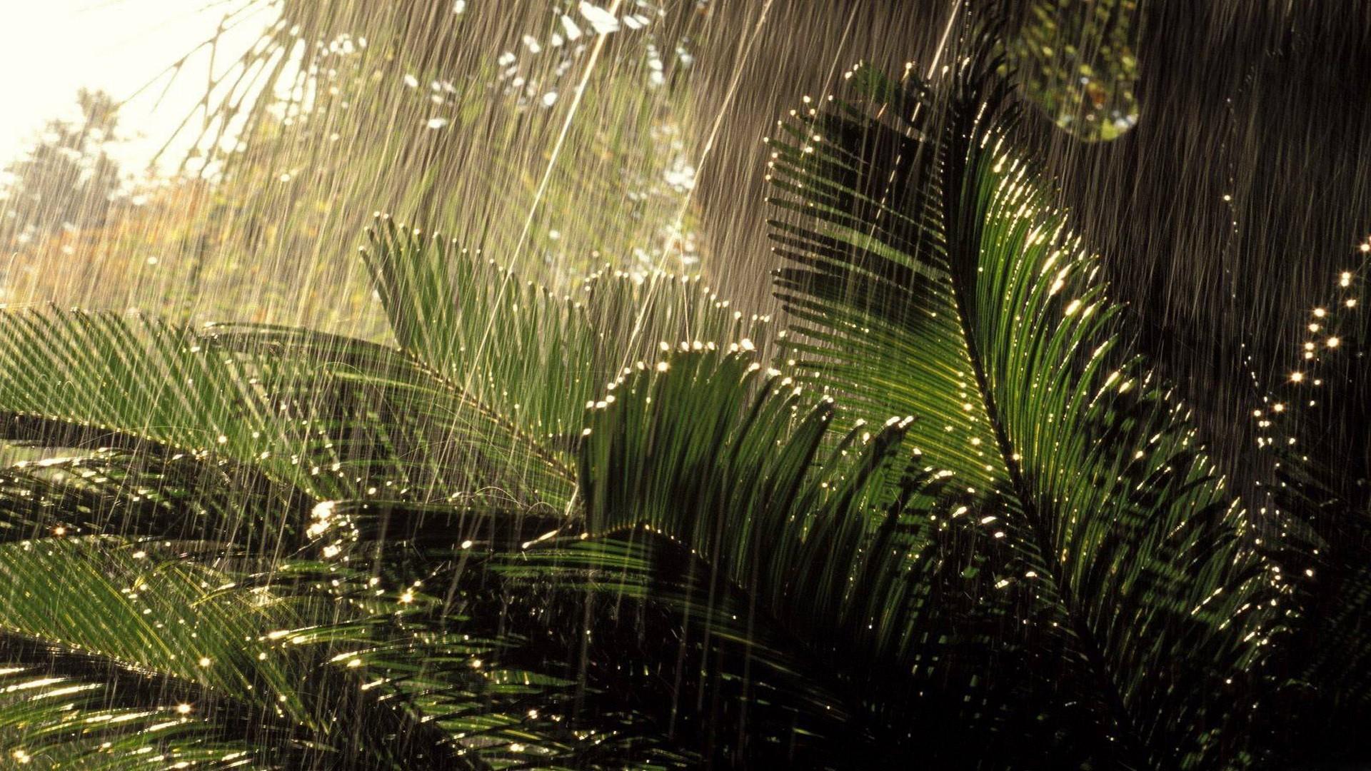 rain hd wallpaper