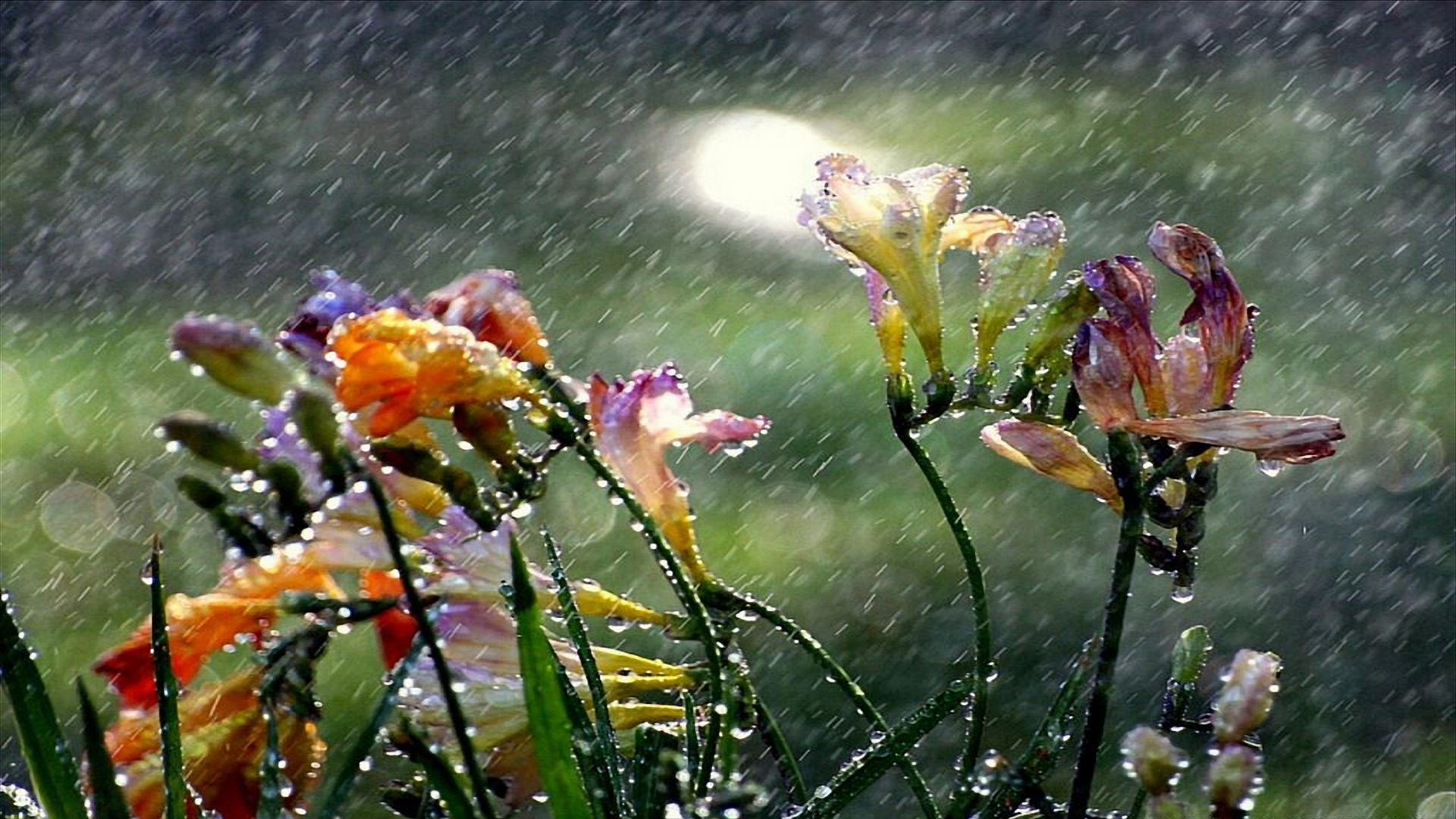 rain wallpaper landscape