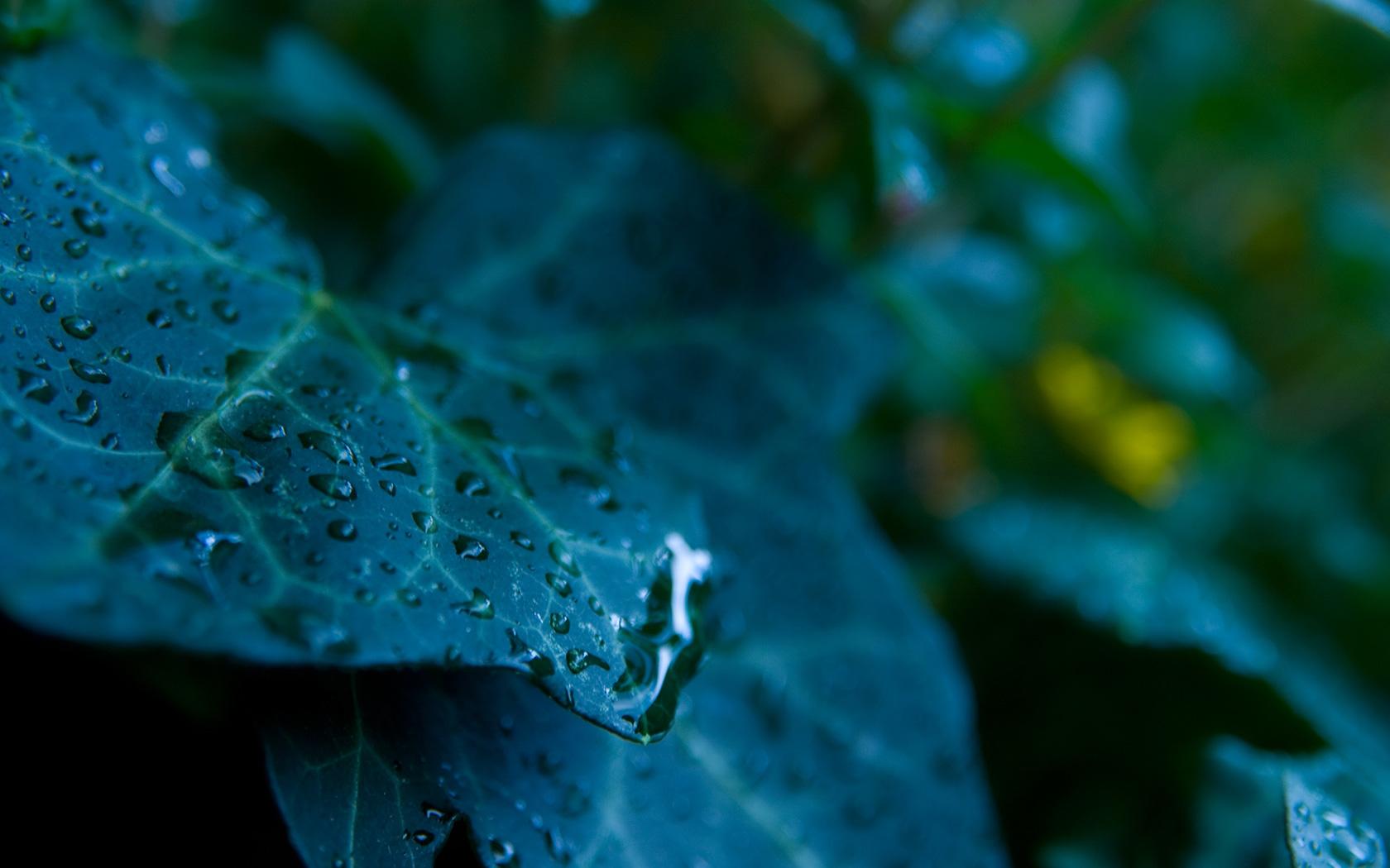 raindrops hd images