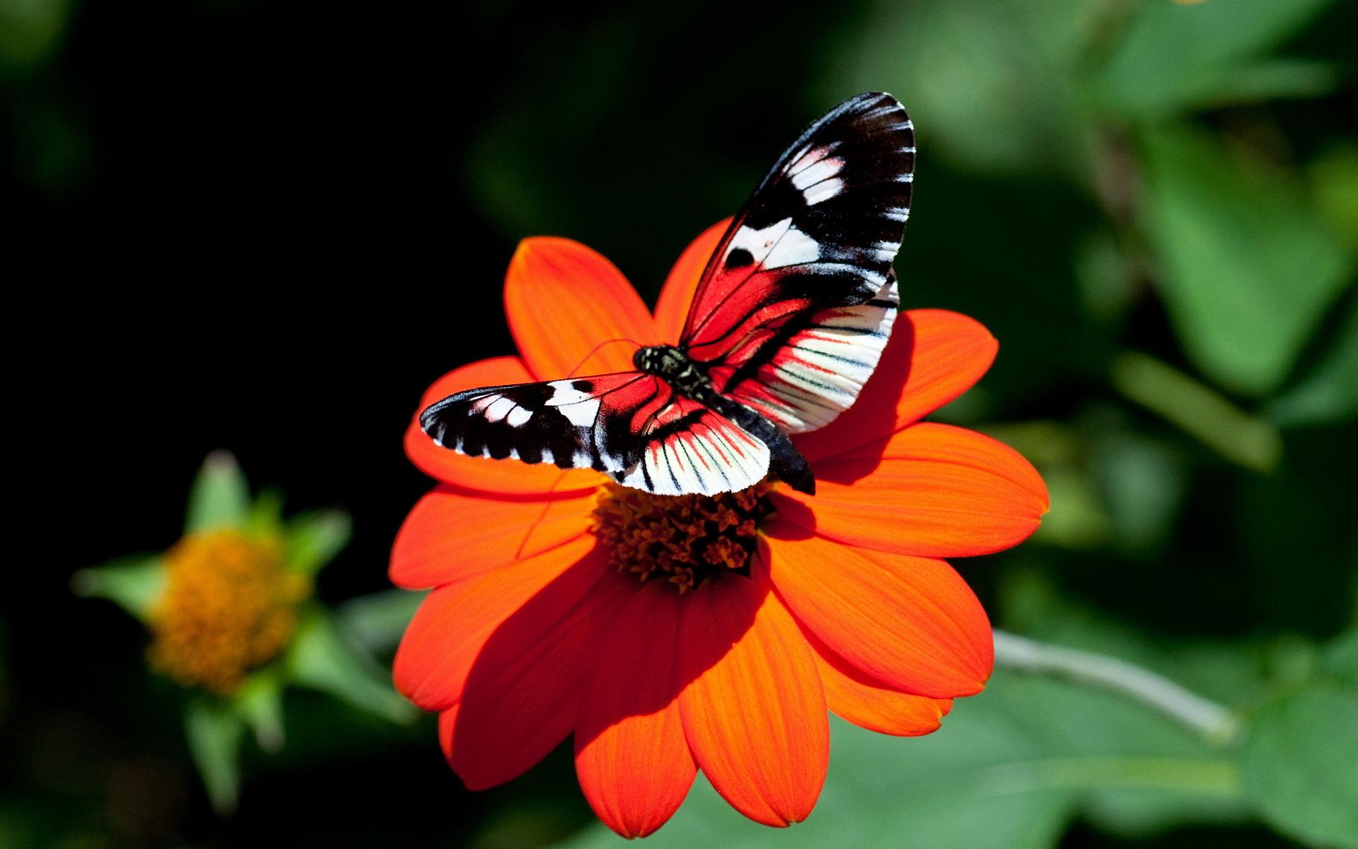 red flower butterfly