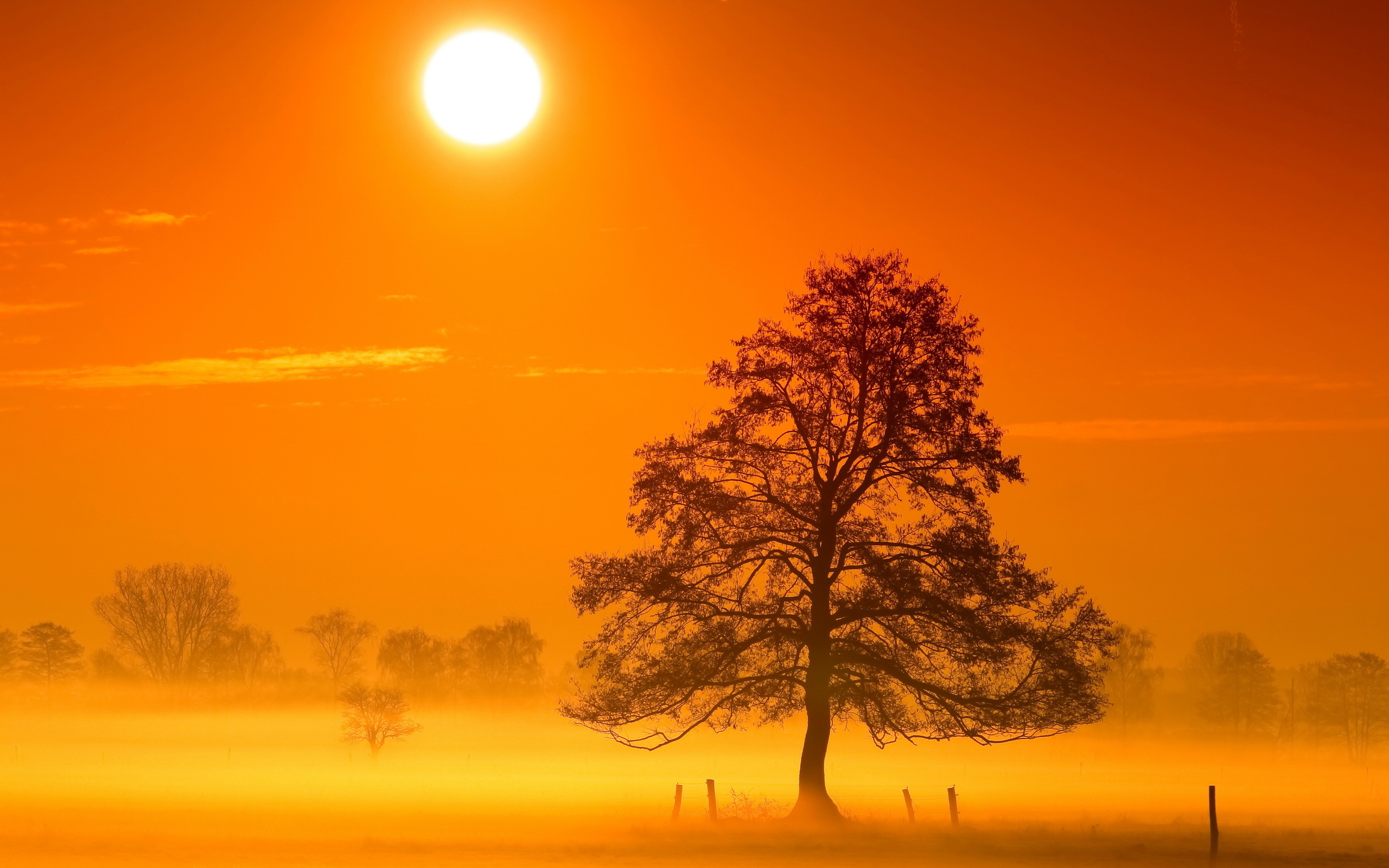 Morning Sunshine Pictures, Photos, and Images for Facebook
