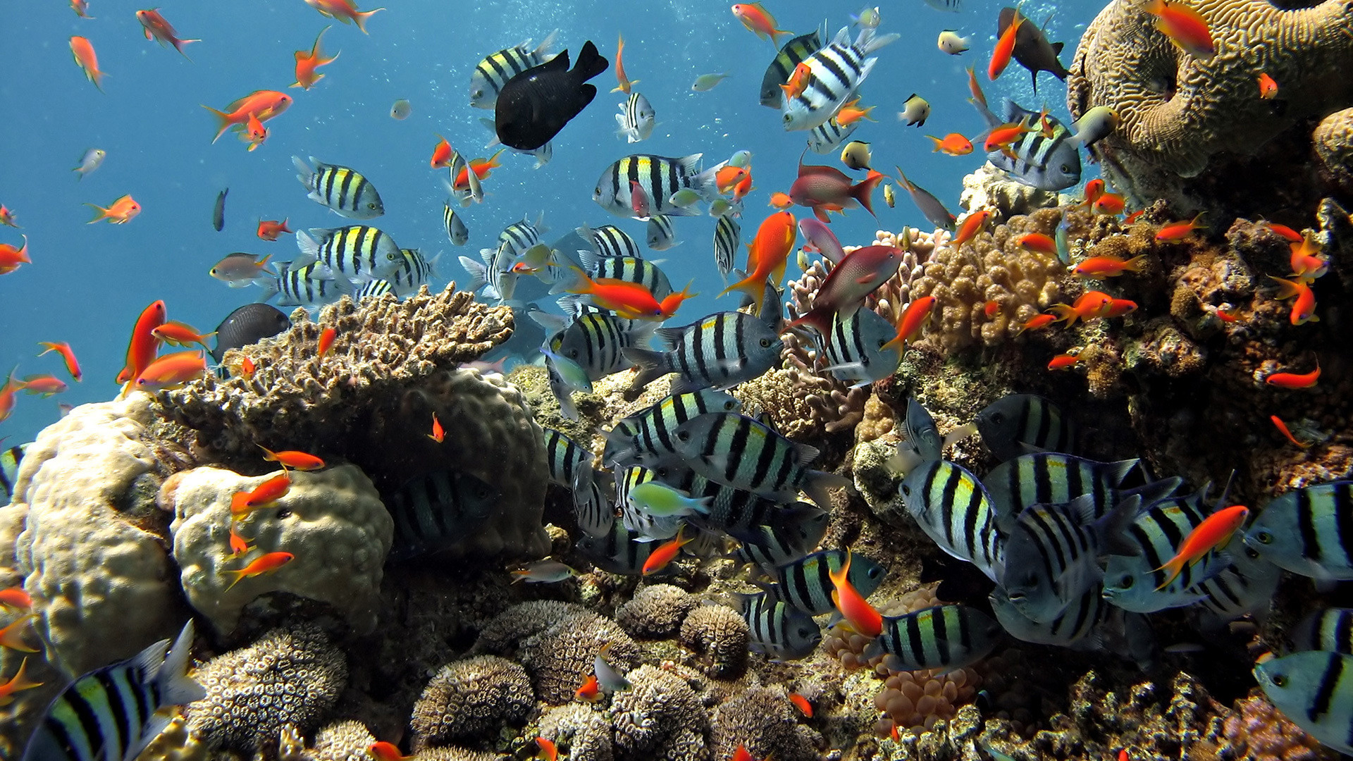 reef picture download