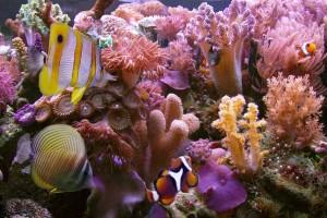 reef wallpaper hd