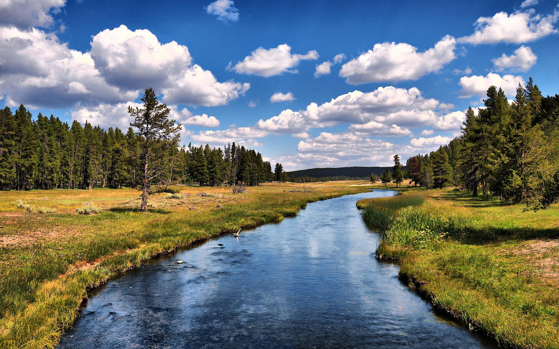 river wallpaper forest
