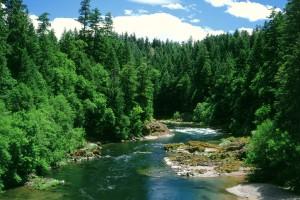 river wallpaper tree