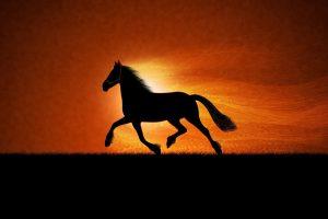running horses wallpaper