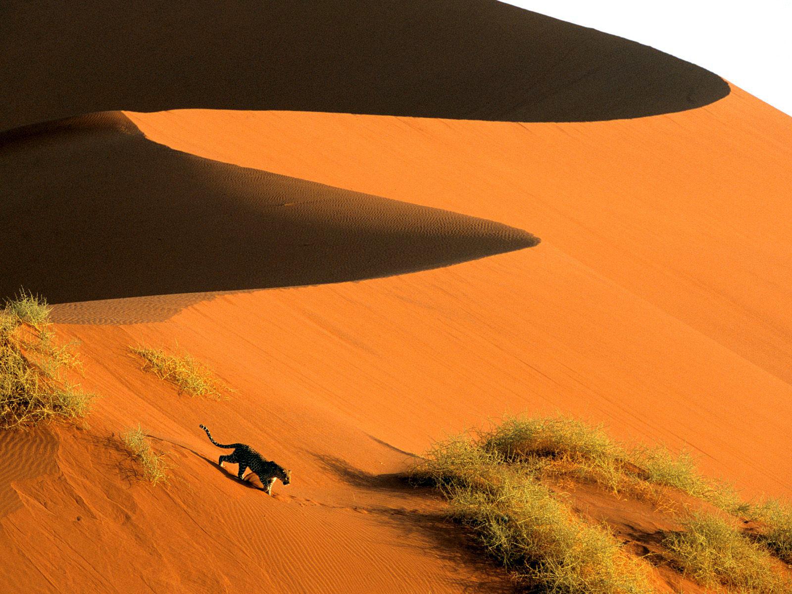 sand dunes wallpaper