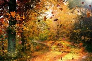 scenery amazing pictures