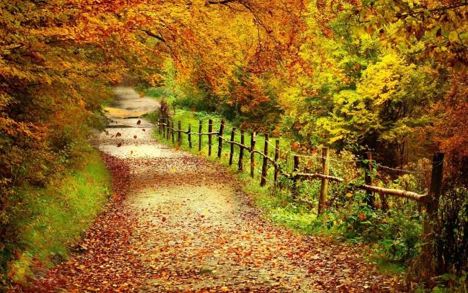 scenery fall wallpaper