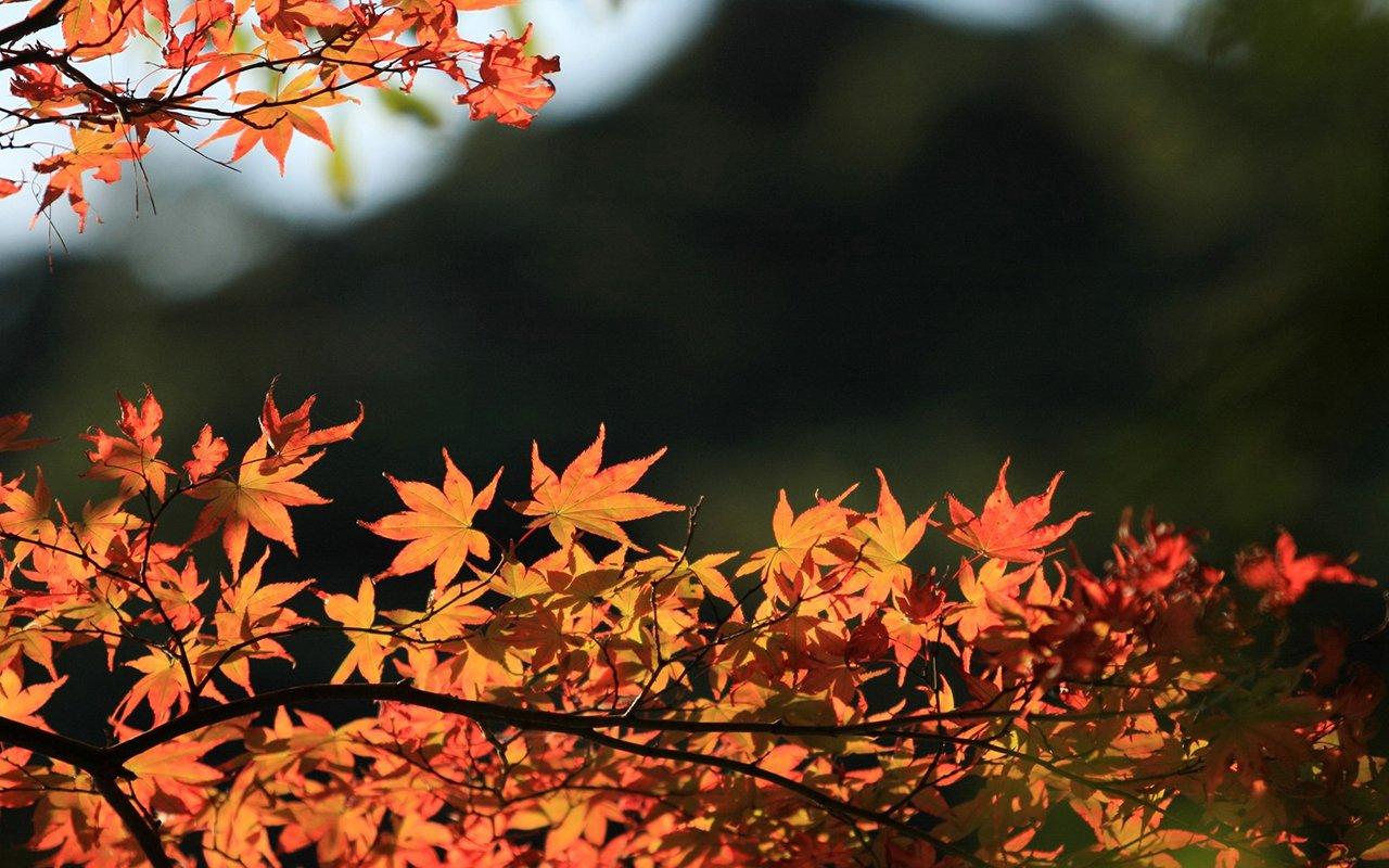 scenery fall