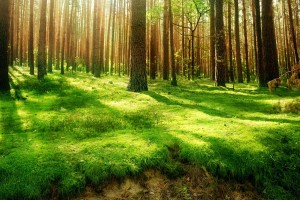 scenery forest