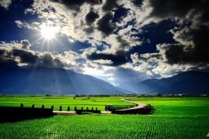 scenery paddy field