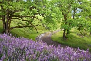 scenery purple