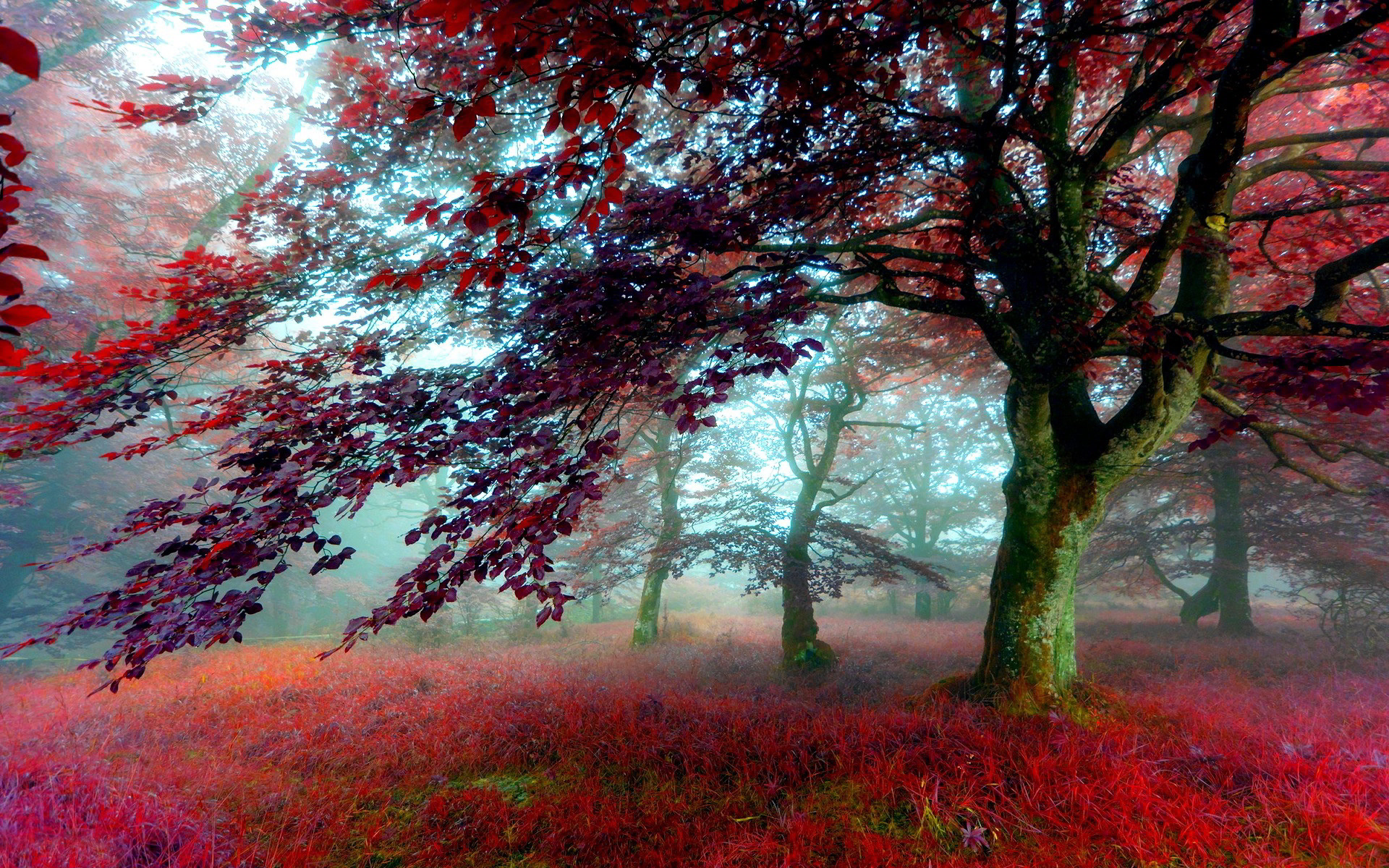 scenery red