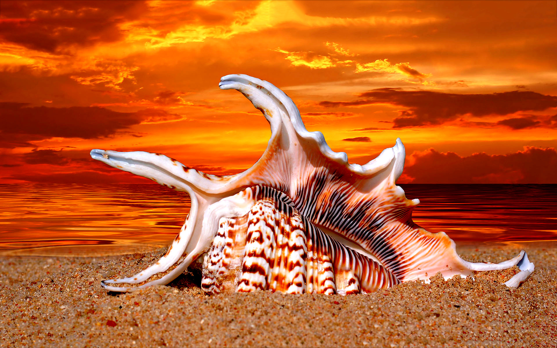 sea shell sunset