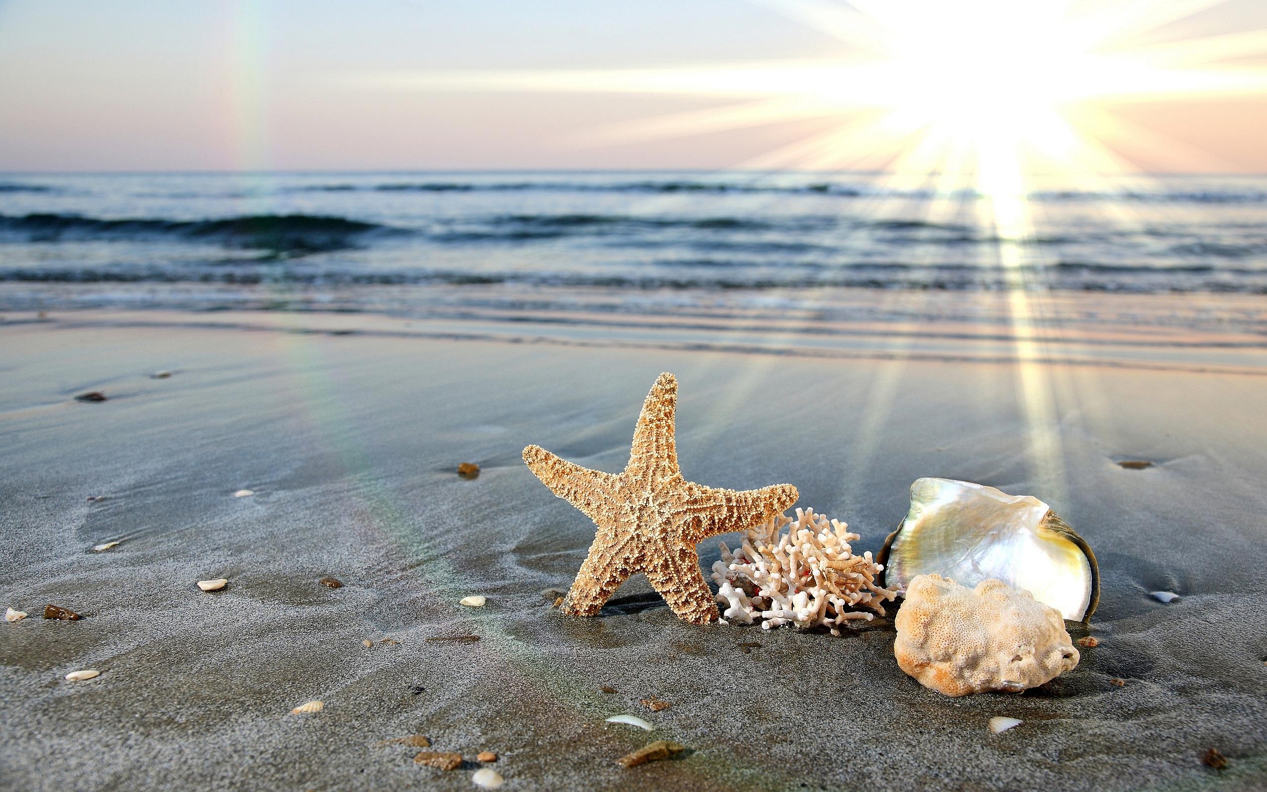 sea star fish