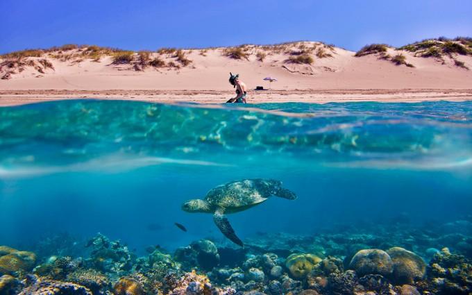 sea turtle desktop wallpaper