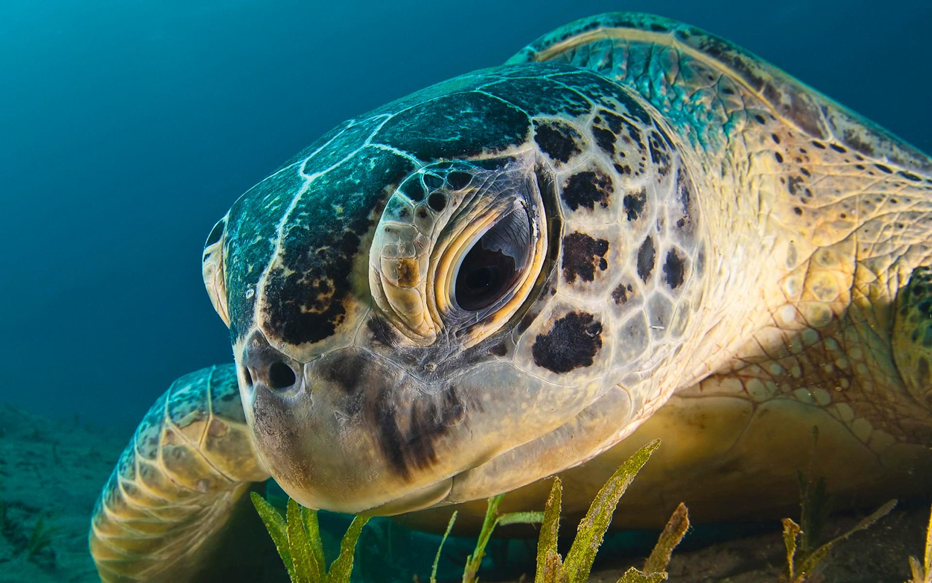 Sea Turtle Water Hd Desktop Wallpapers 4k Hd