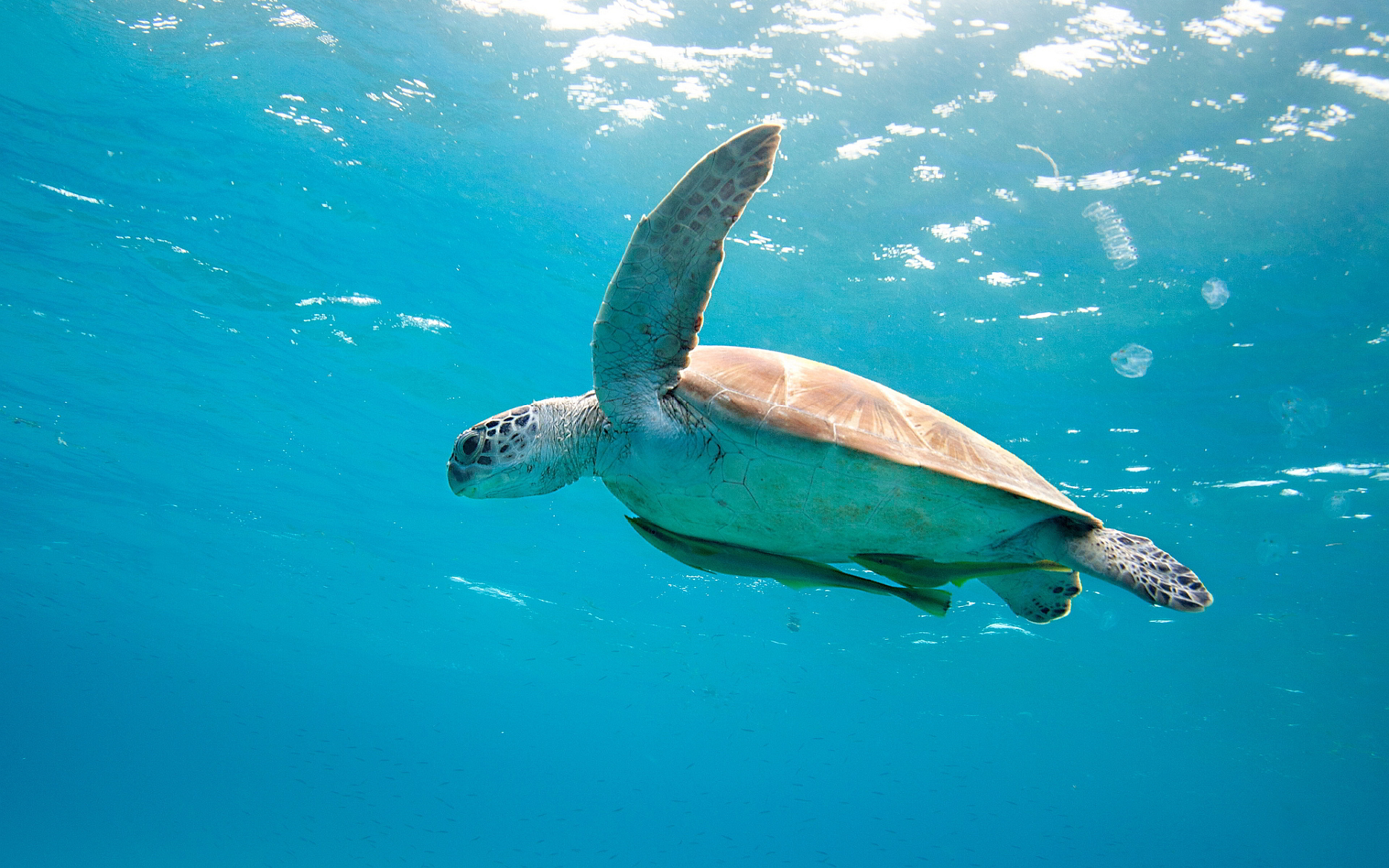animals turtle Wallpapers HD / Desktop and Mobile Backgrounds