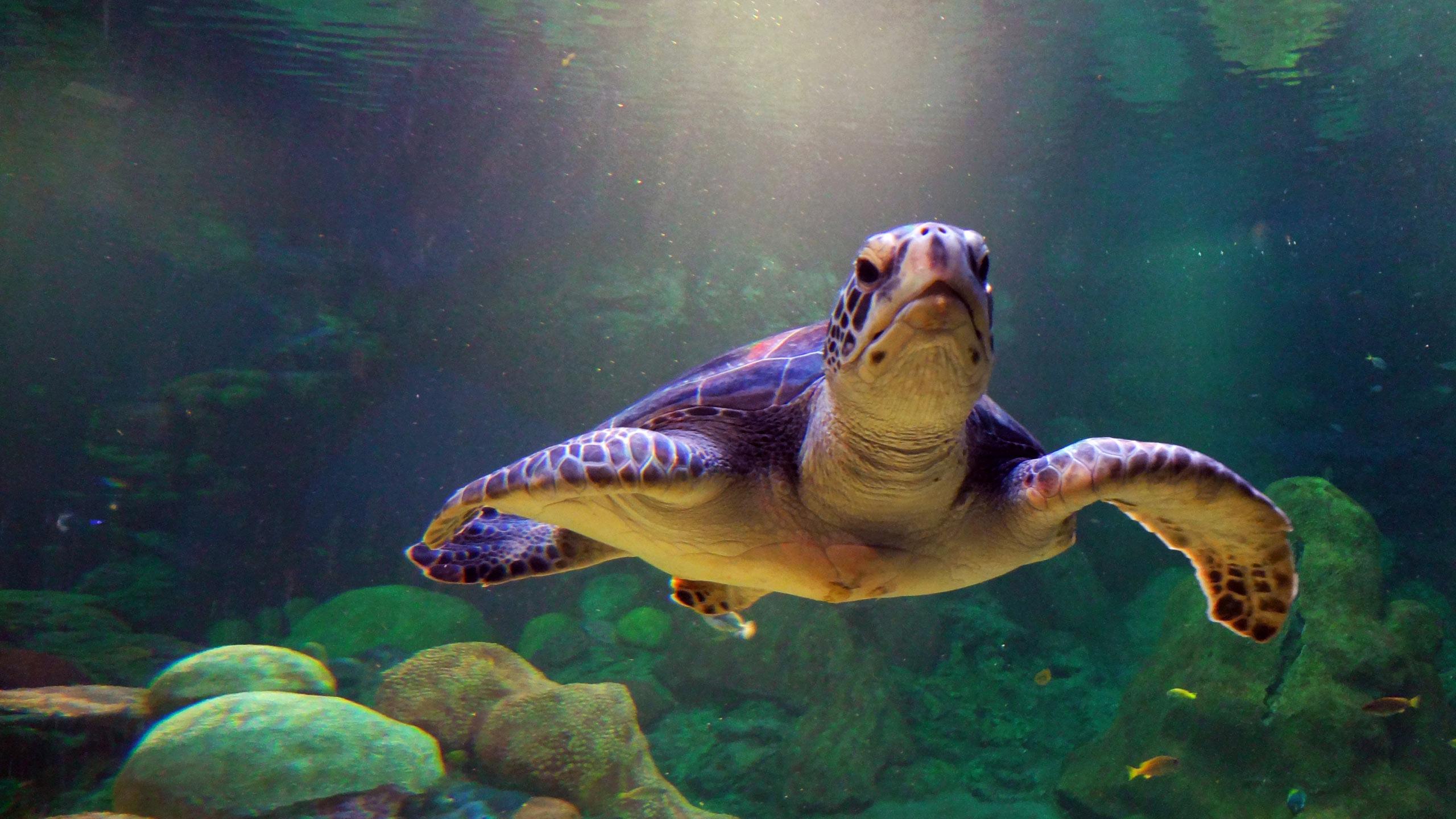 sea turtles hd - HD Desktop Wallpapers   4k HD
