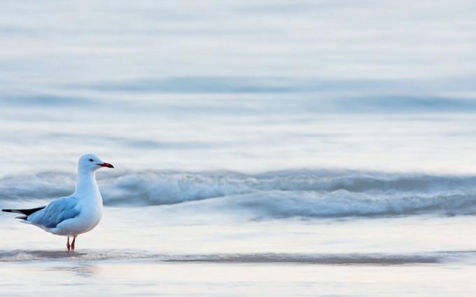 seagull beach waves