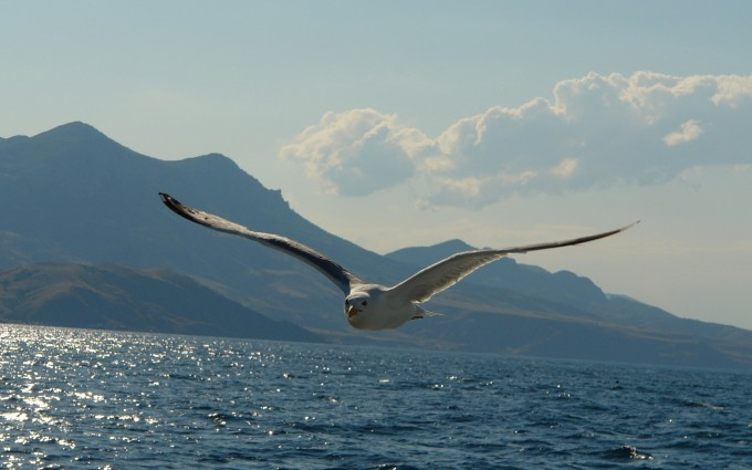 seagull pictures free