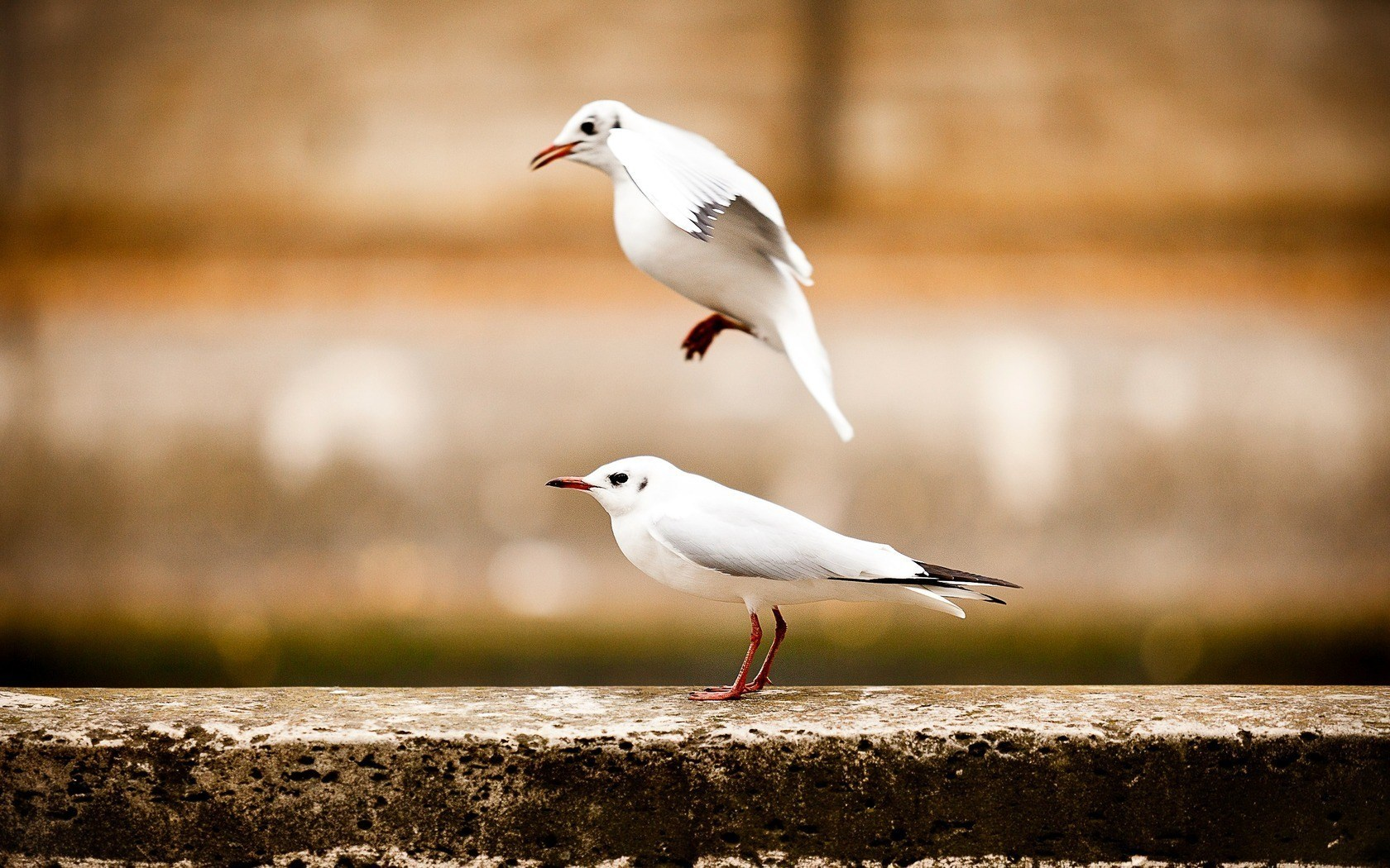 seagulls picture