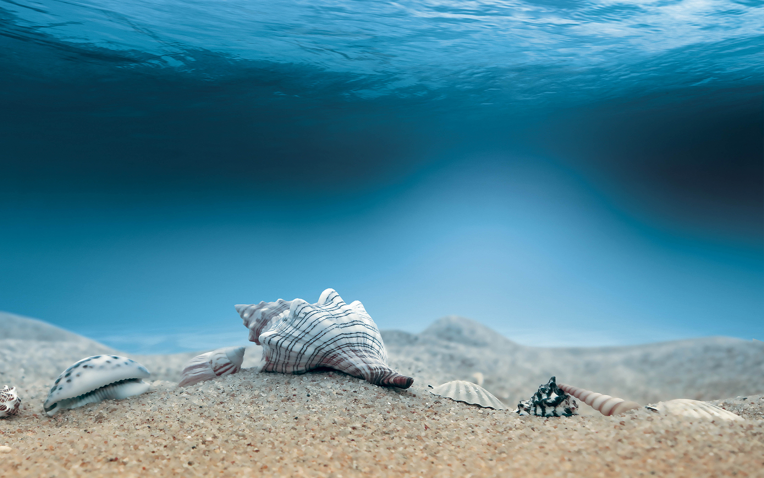 shells seabed wallpaper