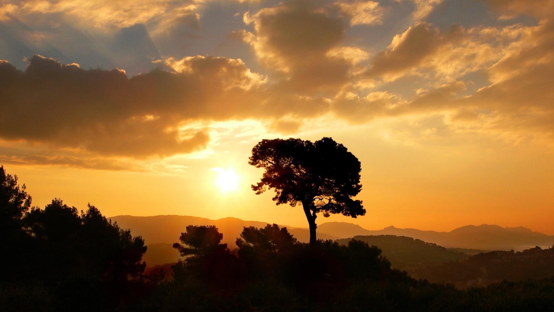 silhouette landscape tree