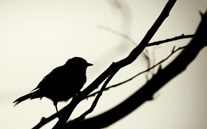 silhouette wallpaper bird
