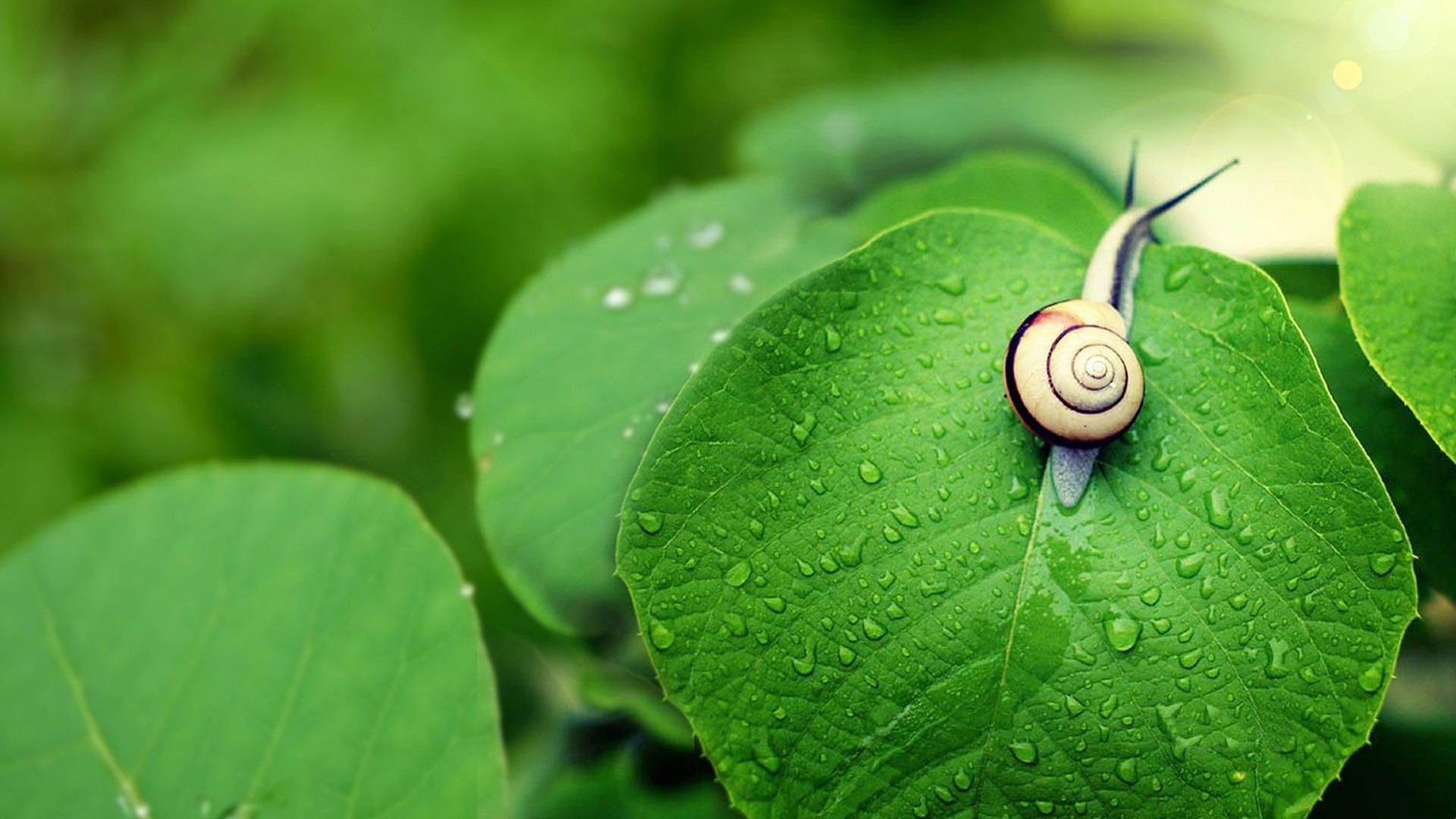 snail photos