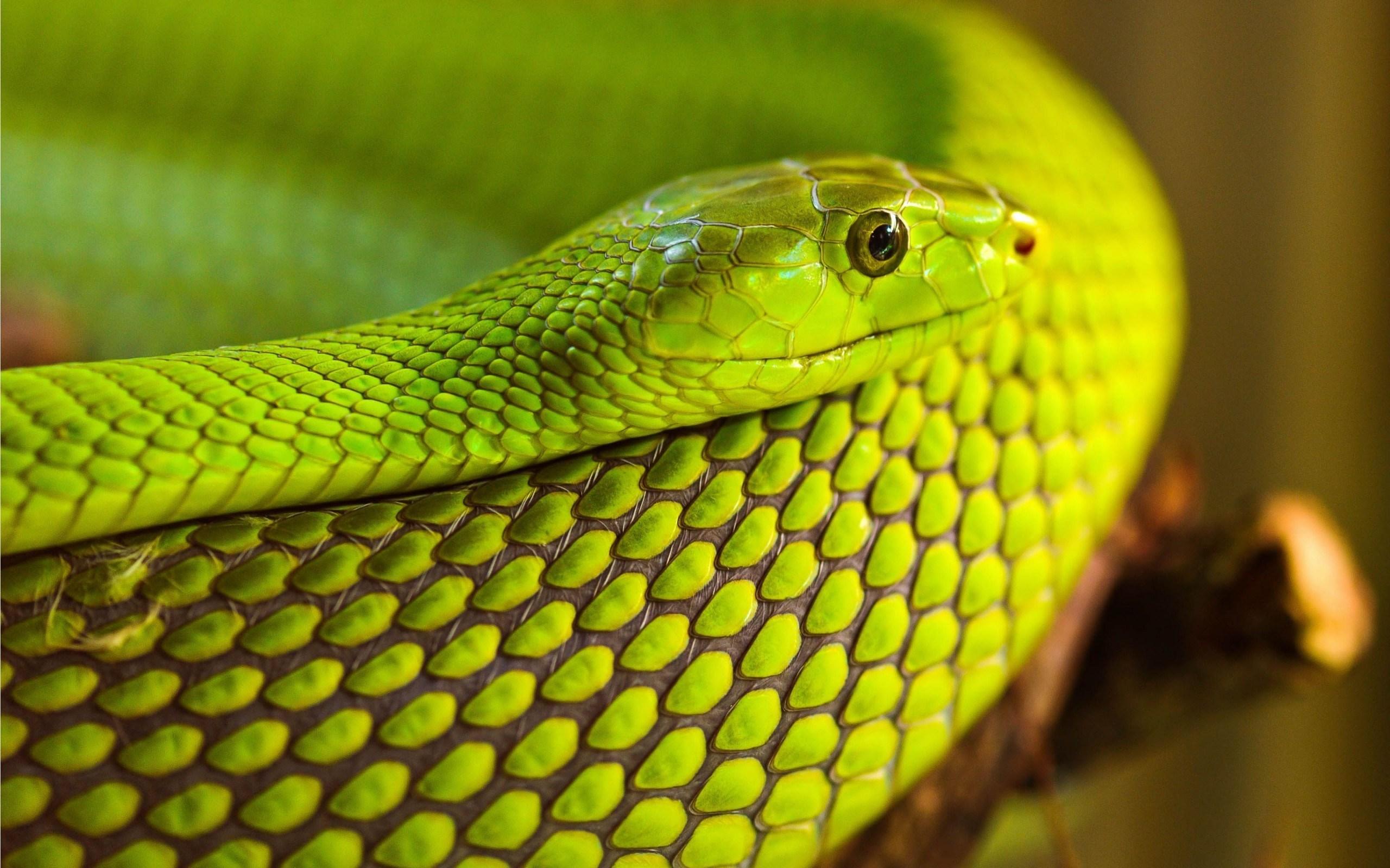 Snake Backgrounds HD Desktop Wallpapers 4k HD