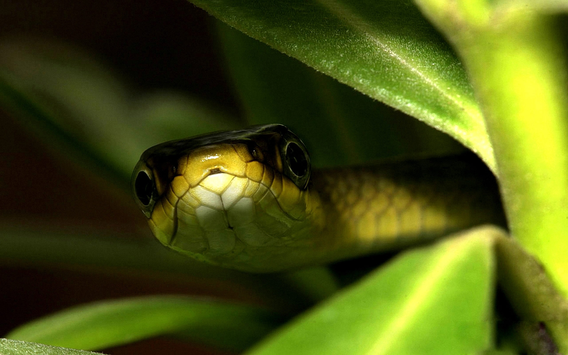 snake pictures in hd