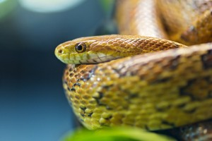 snakes photos hd