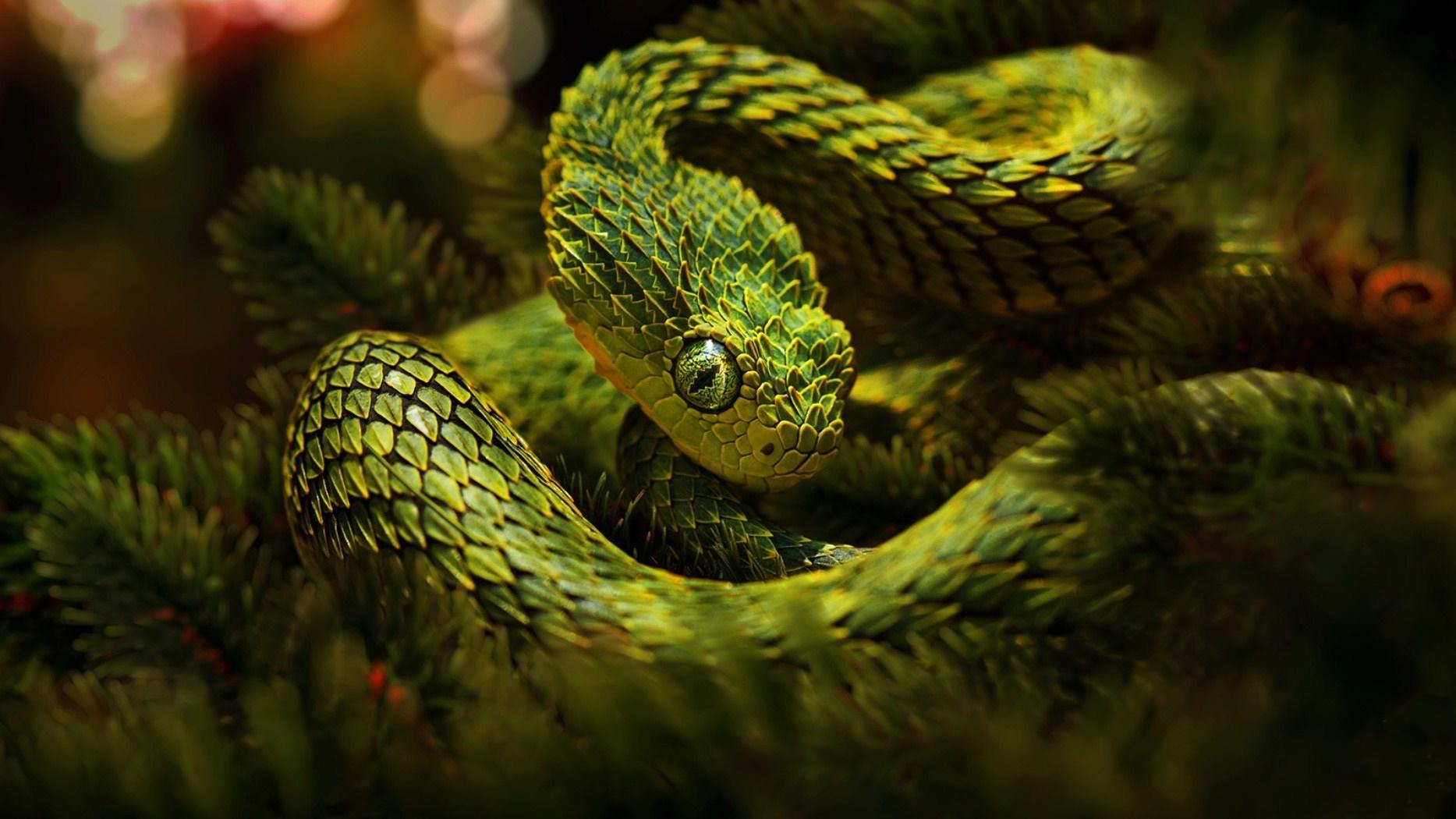 snakes wallpaper