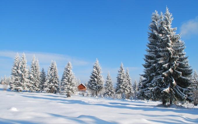 snow mountain trees