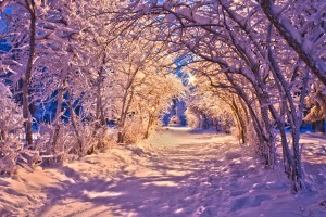 snow wallpaper christmas