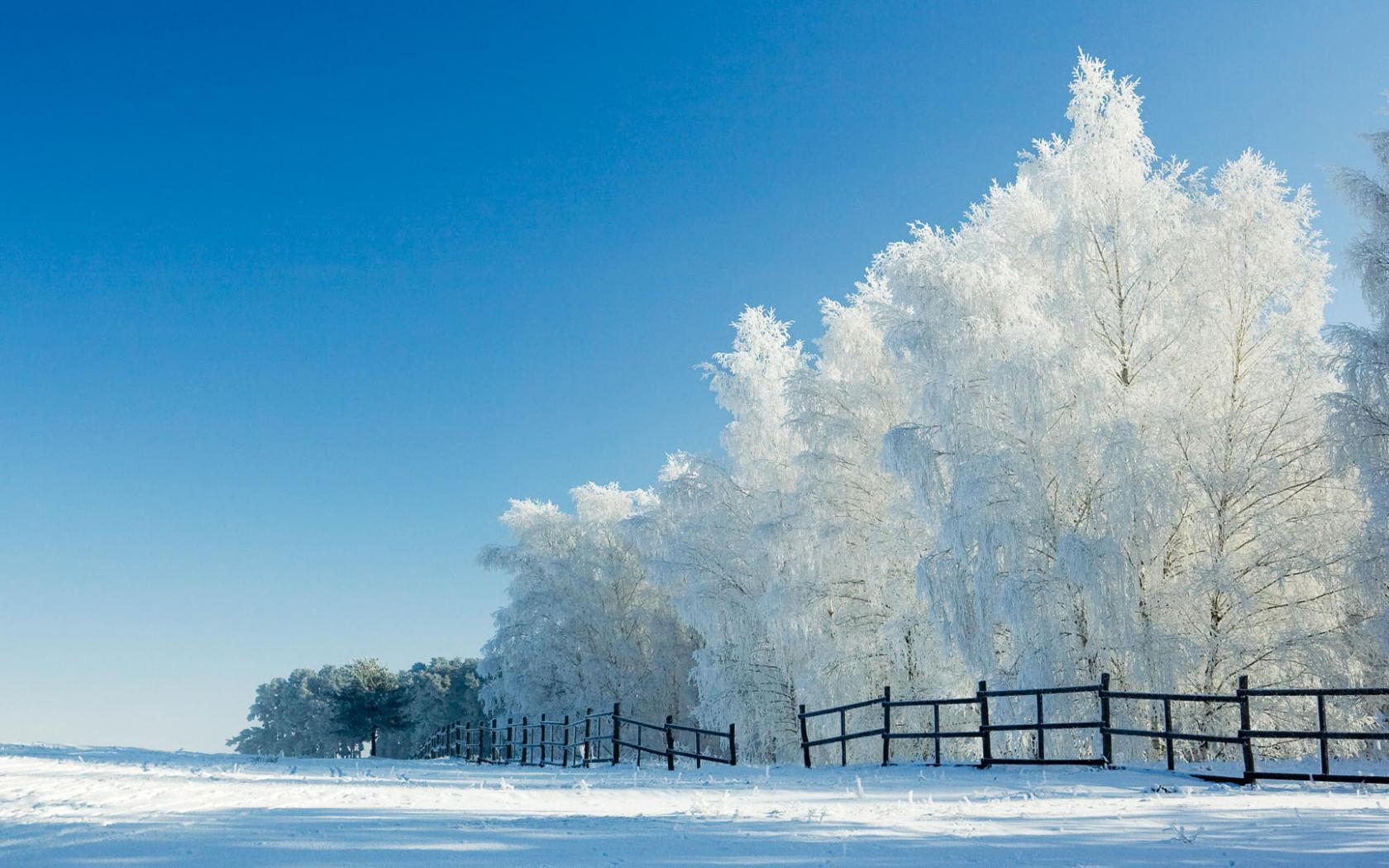 snow wallpaper live