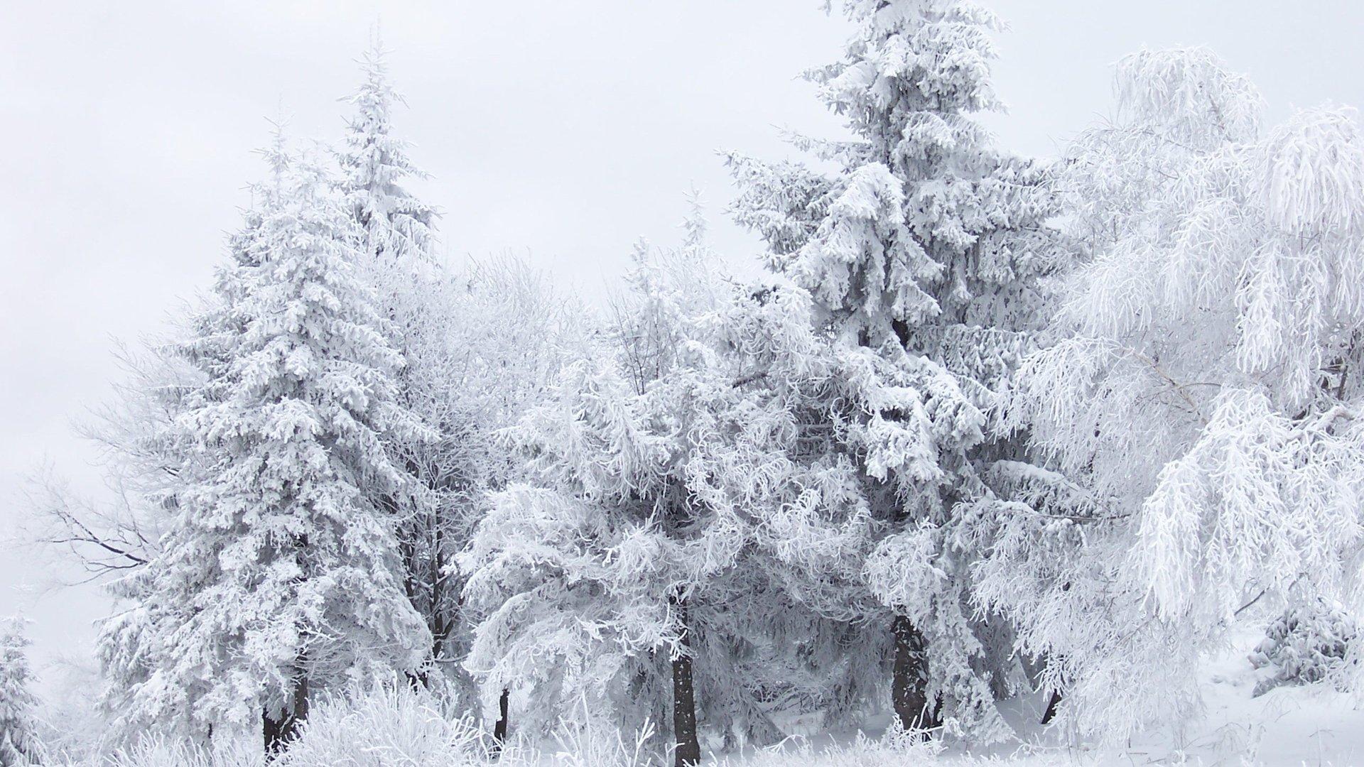 snow wallpaper mobile