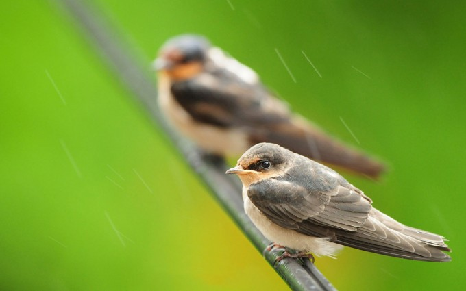 sparrow picture