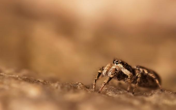 spider image hd