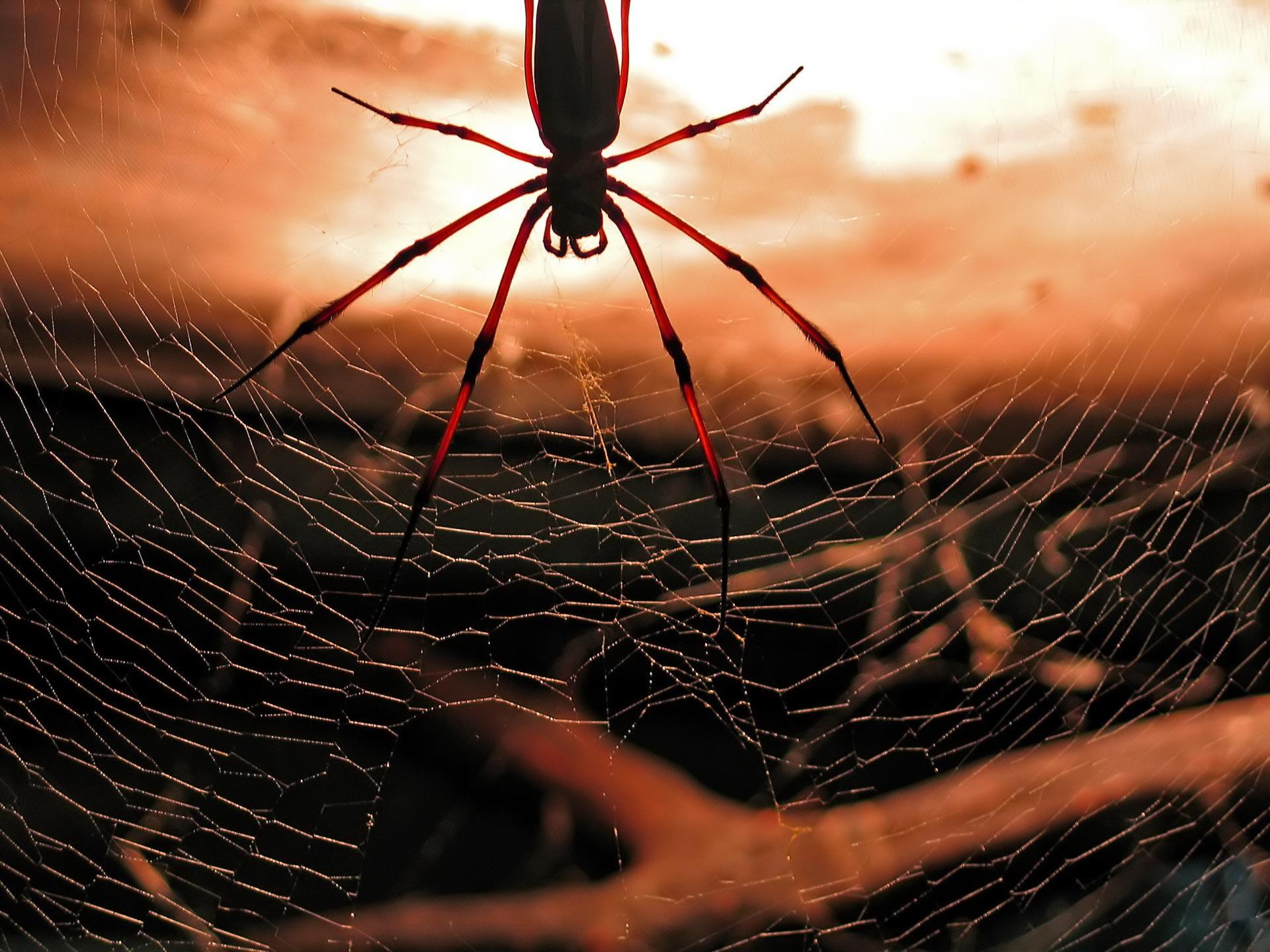 spider picture 1080p - HD Desktop Wallpapers   4k HD