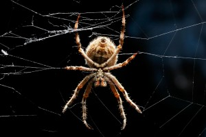 spider pictures 1080p