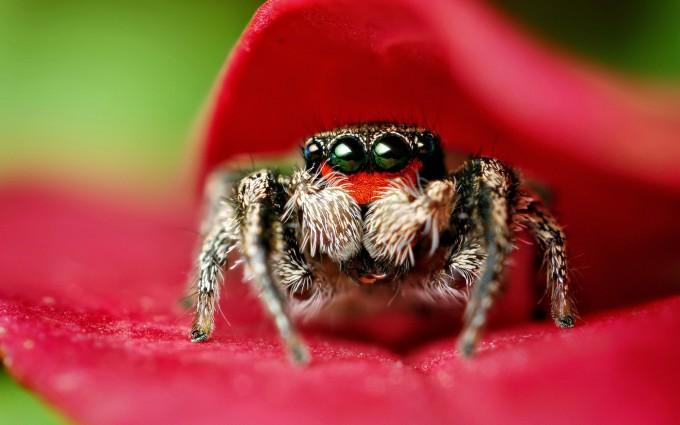 spider wallpaper 1080p